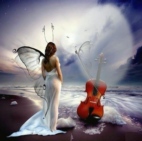 farfalla-